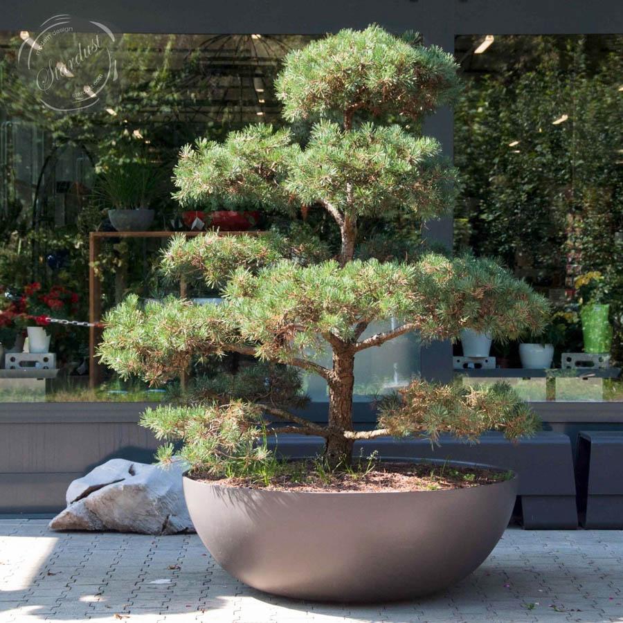 44 54 65 Inch Black Grey Premium Concrete Bowl Planters Pots